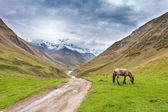 Caucasus landscape in Georgia — Stock Photo