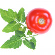 Stock Photo: Tomato and leaves