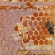 Stock Photo: Bee on honeycells