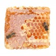 Stock Photo: Honeycomb and bee