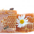 Honeycomb - Stockfoto