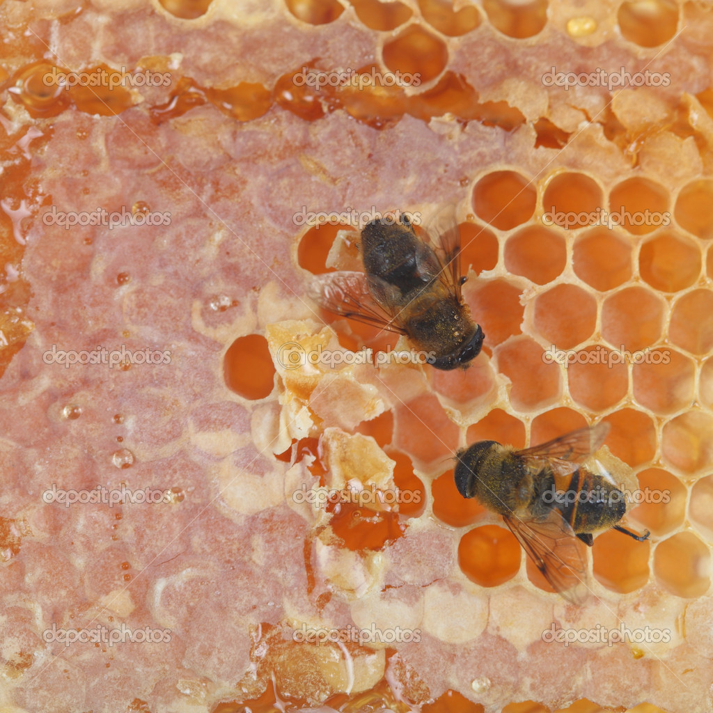 Bees on honeycells — Stock Photo #13128444