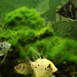 Stock Video: Aquarium with tropical fish
