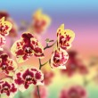 Beautiful yellow with red spots orchid — Stock Photo #13639234