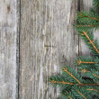 Christmas fir tree — Stock Photo #13639270