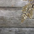 Golden twig  — Stock Photo