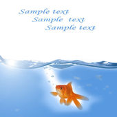 Gold fish swimming in the water — Stock Photo