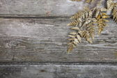 Golden twig — Foto Stock