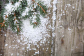 Fir branches in the snow — Stock Photo