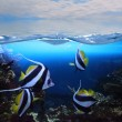 Stock Photo: Group of fishes (Moorish idol)