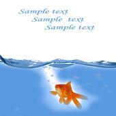 Goldene fische im wasser schwimmen — Stockfoto