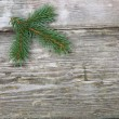 Christmas fir tree — Stock Photo #14101342