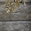Golden twig - Stock Photo
