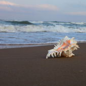 Shell on the shore of the sea — Foto Stock