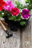 苗木花卉木制的桌子上 — 图库照片