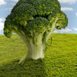 Broccoli Tree — Stock Photo