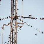 Постер, плакат: Birds on Wire