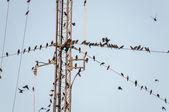 Uccelli sul filo — Foto Stock