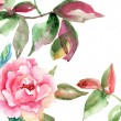 Rose flower with green leaves - Stock Photo