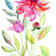 Dahlia flower, watercolor illustration - Stock Photo