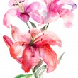 Lily flowers, watercolor illustration - Stock Photo