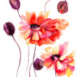 Stock Photo: Beautiful Poppy flowers, Watercolor painting