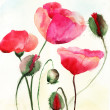 Stylized Poppy flowers illustration - Stock Photo