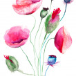 Poppy flowers, watercolor illustration - Stock Photo