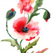 Beautiful Poppy flowers, Watercolor painting - Stock Photo