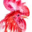 Rooster, watercolor illustration - Stock Photo