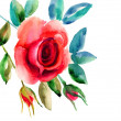 Original Rose flowers illustration - Stock Photo
