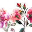 Beautiful Roses flowers, Watercolor painting - Stock Photo