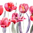 Tulips flowers - Stock Photo