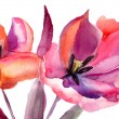 Tulips flowers, Watercolor painting — Stock Photo #13753165