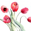Beautiful Tulips flowers - Stock Photo