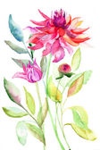 Dahlia flower, watercolor illustration — Stock Photo