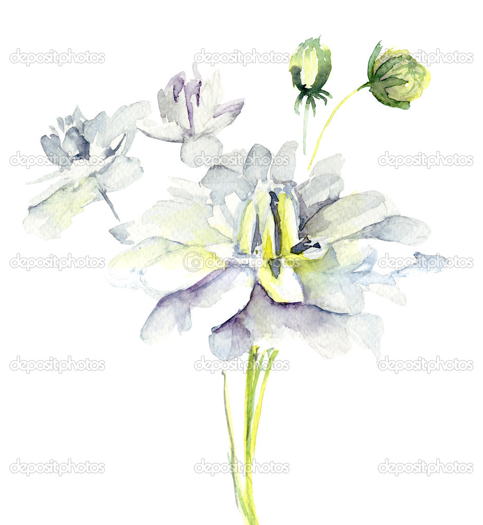Watercolor illustration with beautiful flowers  — Stock Photo #13753077