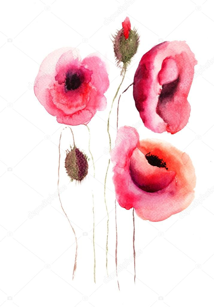 Poppy flowers, watercolor illustration — Stock Photo #13753116