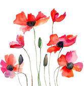 Coloridas flores rojas — Foto de Stock