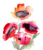 Mooie rode bloemen — Stockfoto