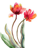 Beautiful red flowers, watercolor illustration — Стоковое фото