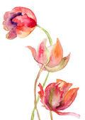 Tre tulpaner blommor — Stockfoto