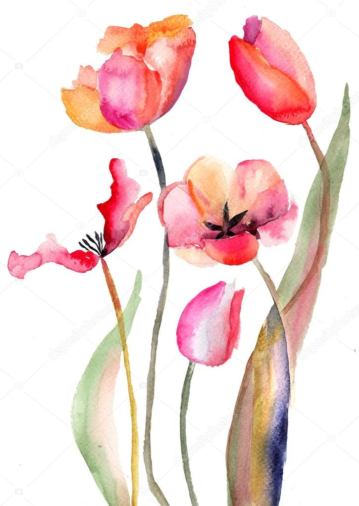 Watercolor painting of Tulips flowers   Photo #14184221