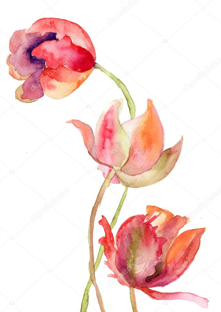 Three Tulips flowers — Stock Photo #14184290