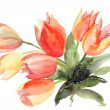 Original Tulips flowers — Stock Photo