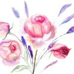 schöne Rosen Blumen — Stockfoto