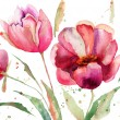 Three Tulips flowers - Foto Stock