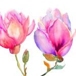 Beautiful Magnolia flowers — Stock Photo #15637943