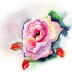Rose flower — Stock Photo #15637945