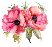 Ilustración estilizadas flores de amapola — Foto de Stock